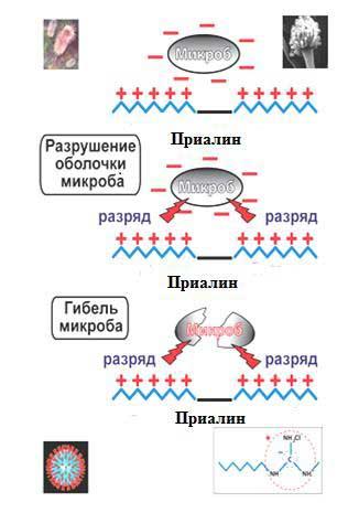Механизм действия препарата Приалин, ВР из химической группы Гуанидины